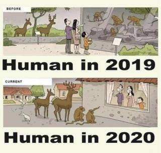 Human in 2019 2020